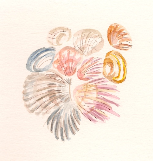 seashells, drawing by lynn